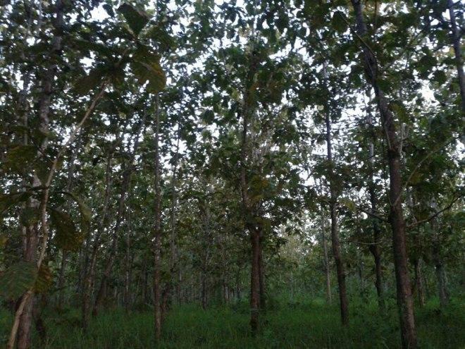 Hutang Jati di Bangsal