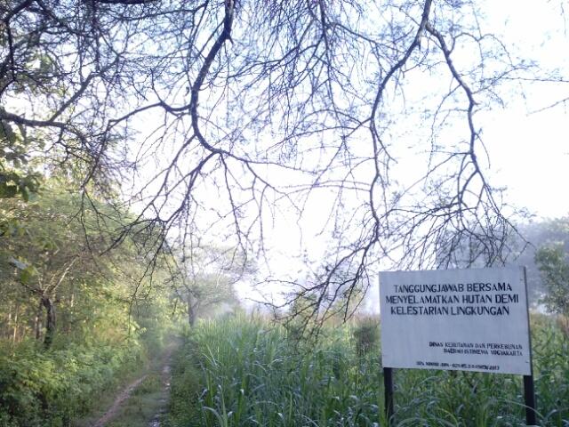 Hutan Cangkring Menjadi Lahan Jagung