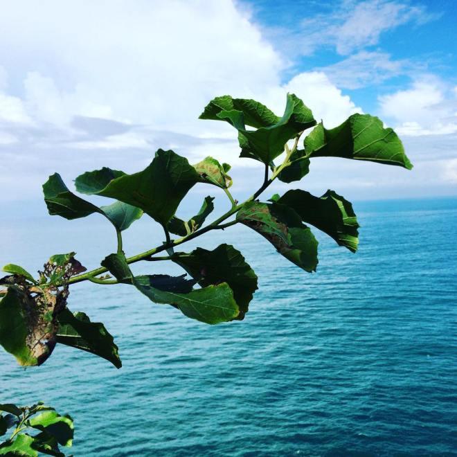 Pantai Laut Bekah Laut Pecis Gunungkidul