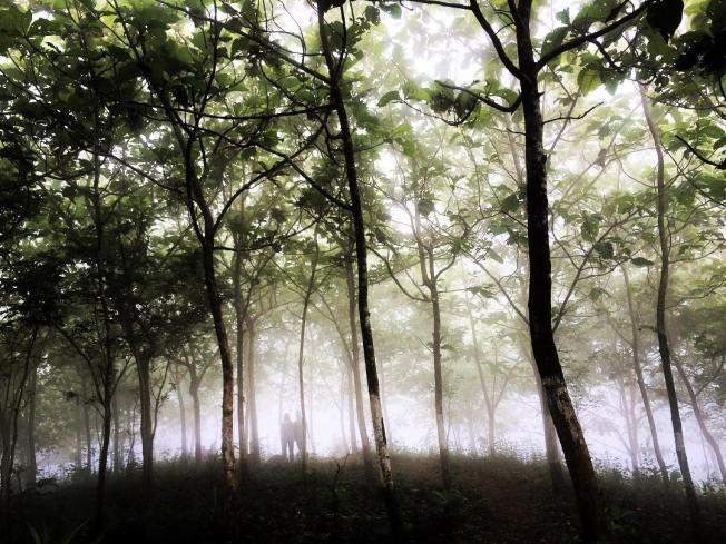 Kabut Pagi dan Hutan Jati di Watu Payung - Turunan Geoforest Panggang Gunungkidul Yogyakarta