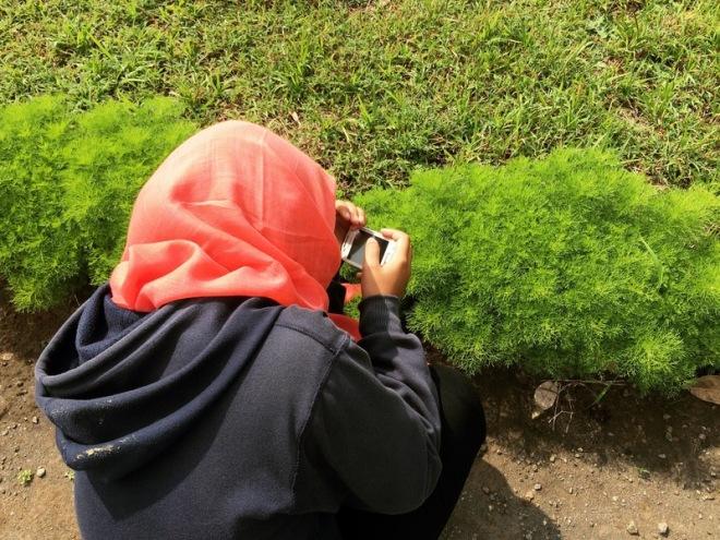Memotret Semacam Tumbuhan di Situs Candi Risan