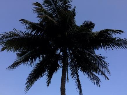 Pantai Kayu Arum : Pohon Nyiur