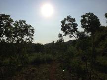 Pantai Kayu Arum : Jalan Setapak Diantara Pohon Singkong