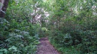 wanagama-eduforest-021
