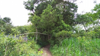 wanagama-eduforest-024