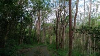 wanagama-eduforest-029